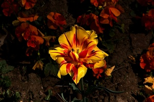 yellow-red 2017 01 as