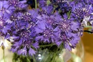 blossom 148 as