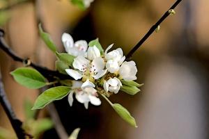 blossom 2016 01 as