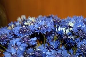 blossom 149 as