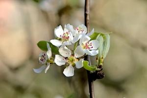 blossom 2016 02 as