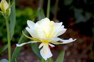flower 2014 02 as