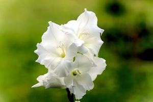 flower 2014 02 as 1