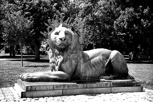 lion 2020.01 rt graphic bw