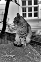 cat.2016.01 as bw