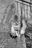 cat.2016.02 as bw
